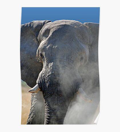 Mr Cranky, Moremi Game Reserve, Botswana, Africa Poster