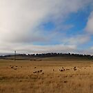 Along the road from Canberra to Cooma by Jenelle  Irvine