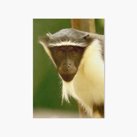 Critically Endangered Roloway Monkey Art Board Print