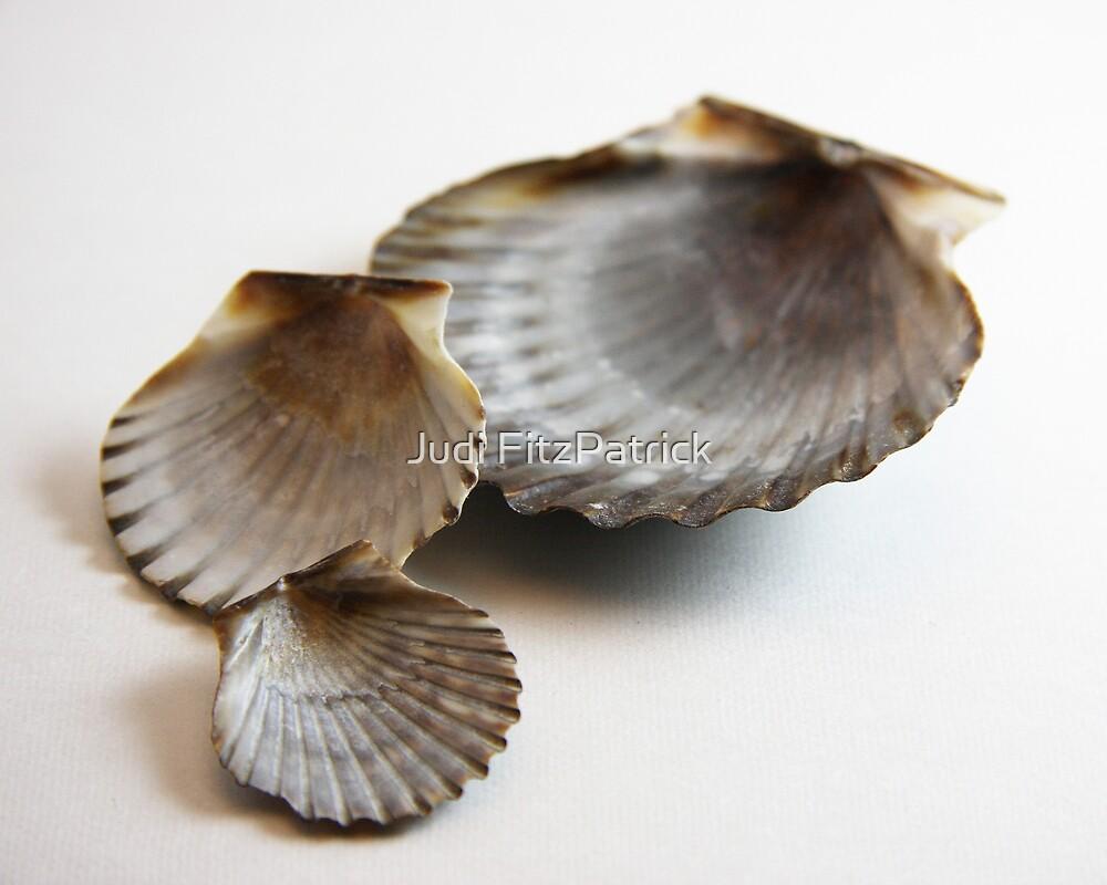 She Sells Seashells by Judi FitzPatrick