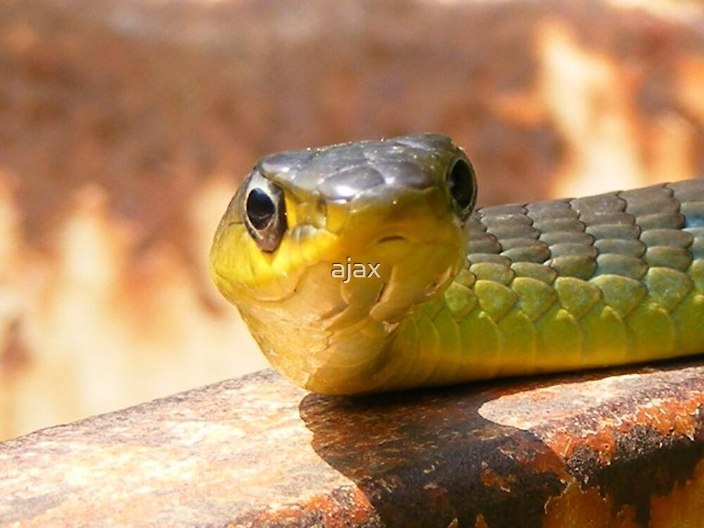 Tree snake by ajax