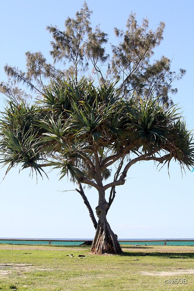 Pandanus Palm by the Beach by caz60B