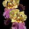 Impressive Irises