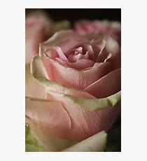 """pink rhapsody"" Photographic Print"