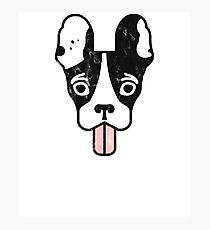 Boston Terrier Crazy Pup  Photographic Print