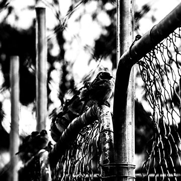 Sparrow Fence by laurenbull16