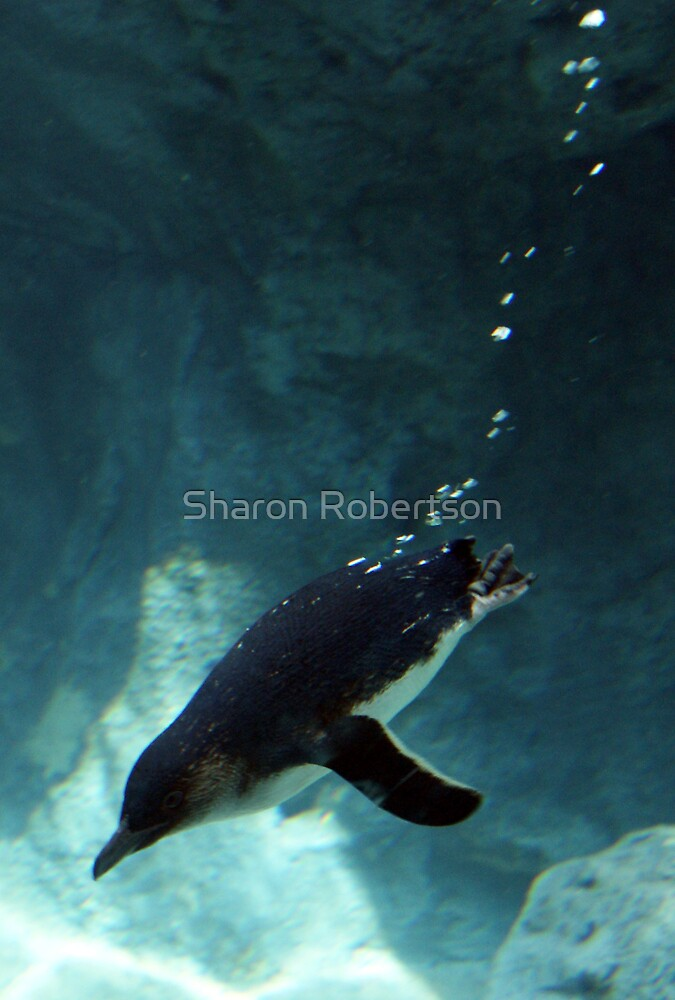 Diving Bubbles by Sharon Robertson