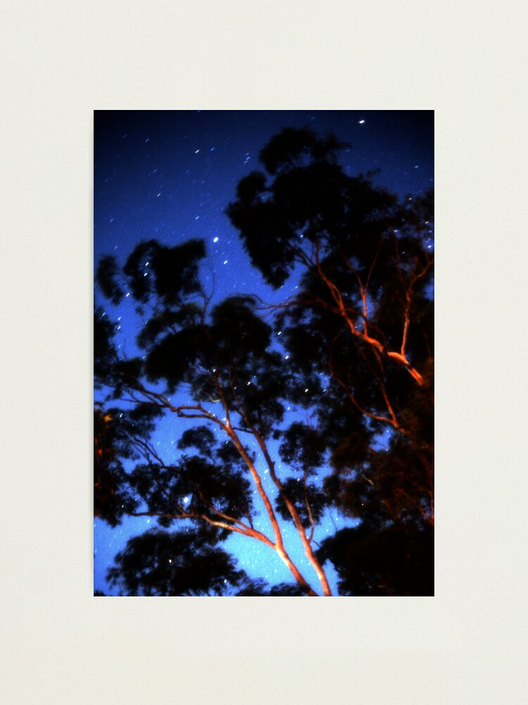 Alternate view of Star trails & eucalypts Photographic Print