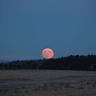 Full Moon in perigee by zumi