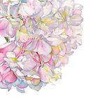 Hydrangea Pink by Louise De Masi