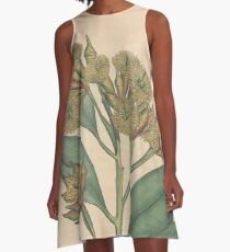 Botanical illustration: Eucalyptus robusta  – State Library Victoria A-Line Dress