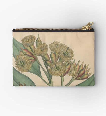 Botanical illustration: Eucalyptus robusta  – State Library Victoria Studio Pouch