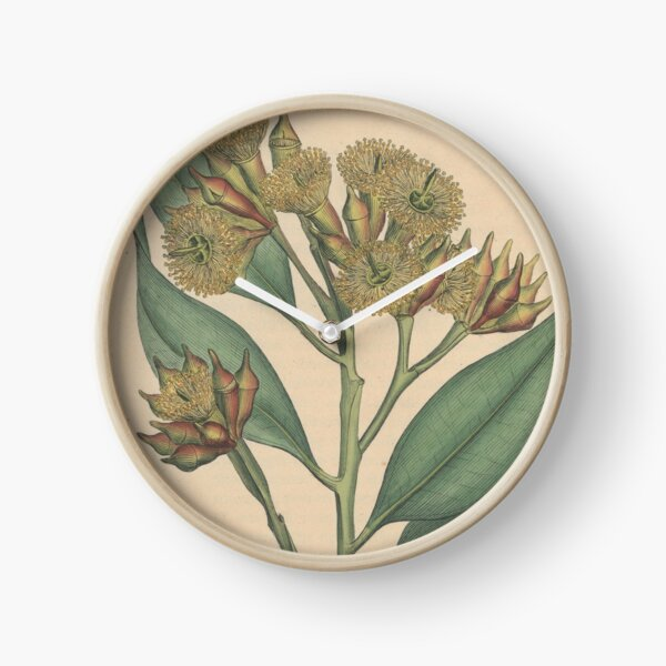 Botanical illustration: Eucalyptus robusta  – State Library Victoria Clock