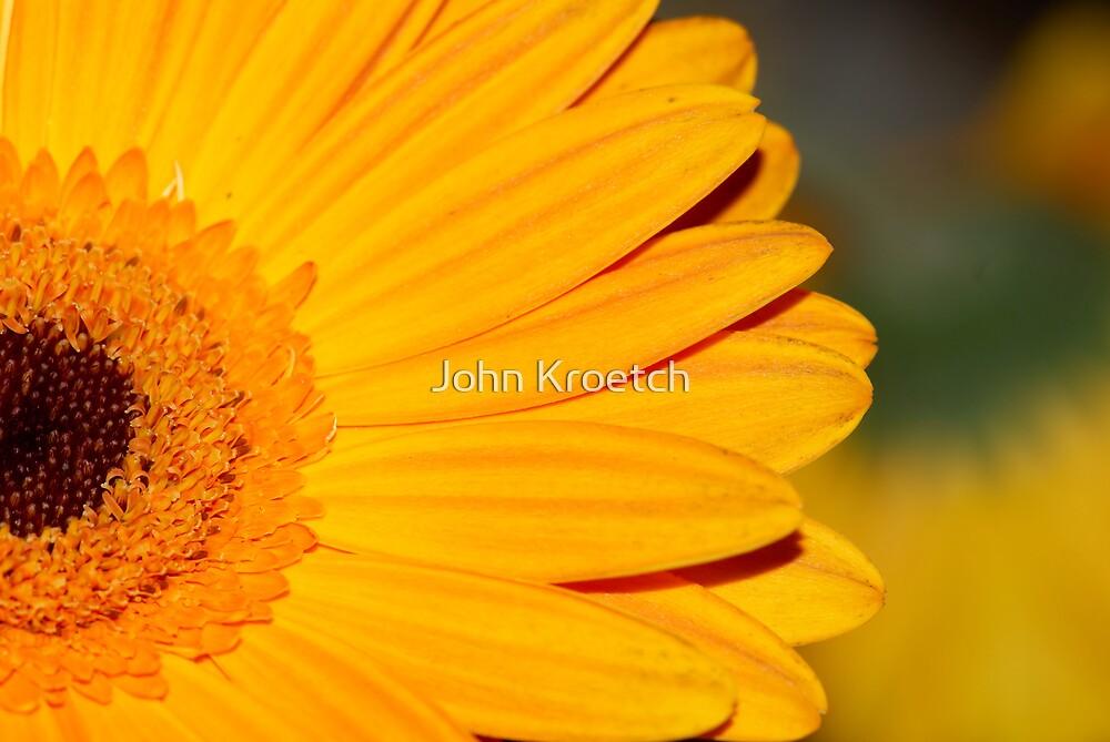 Closeup Sunflower by John Kroetch