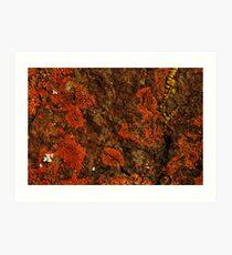 Orange and Yellow Lichen Art Print