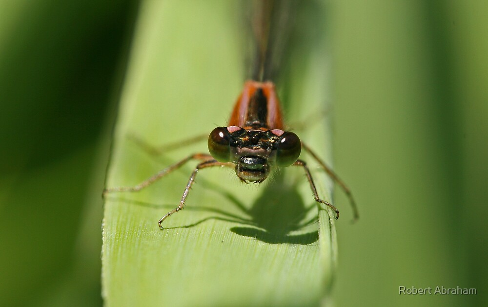 What Big Eyes .......... by Robert Abraham