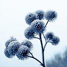 Winter scene by Anita Harris