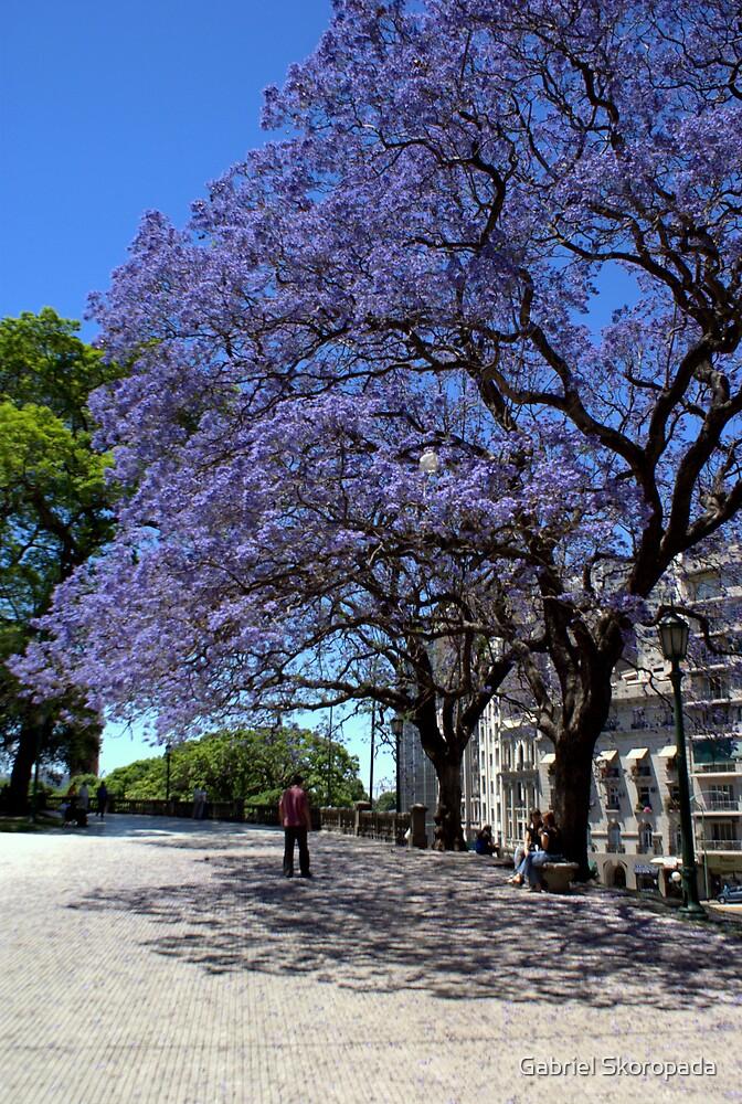 Jacarandá tree by Gabriel Skoropada