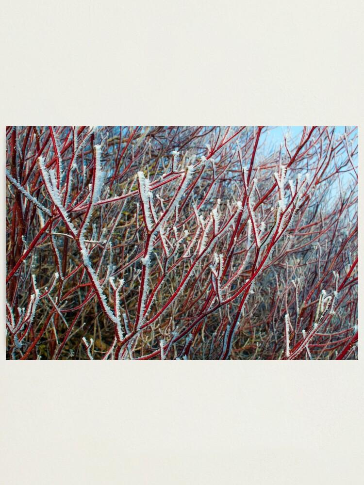 Alternate view of Winter scene Photographic Print