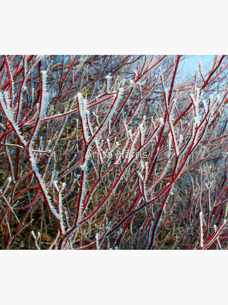 Winter scene by plasticflower