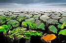 Life on Earth by Igor Zenin