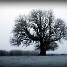 Winter Tree by Anita Harris