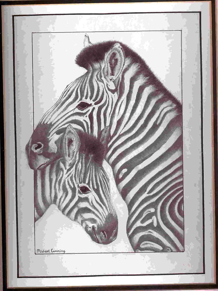 Zebra and foal by Mike Cumming