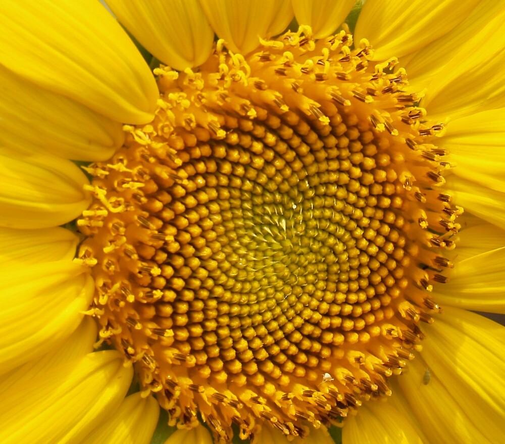 Burst of Sunshine by sharont