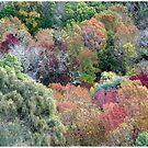 Autumn Splendour by Marguerite Foxon