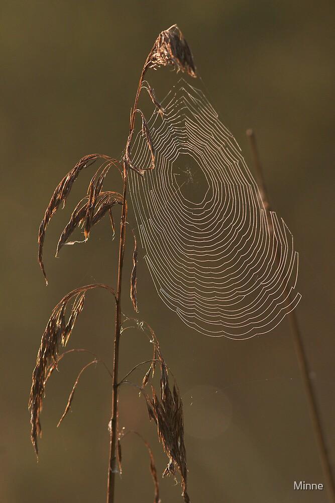 Spiderweb by Minne