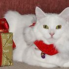 Christmas Cat by Lorraine Wilson
