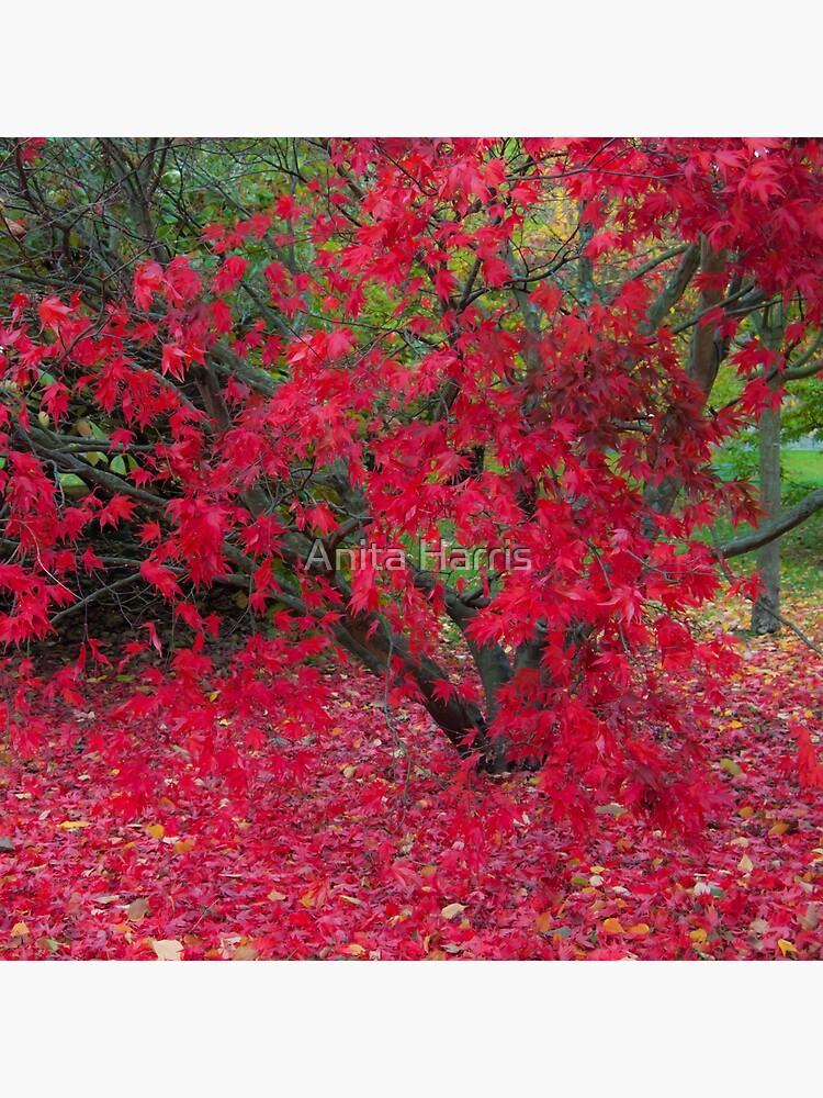 Red Fall by plasticflower