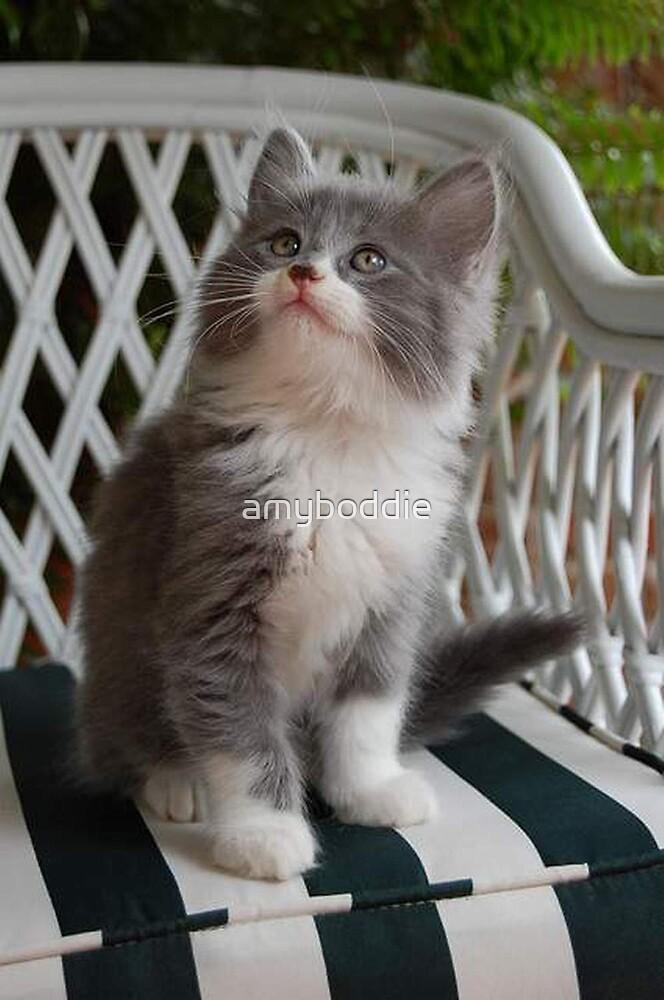 Precious Kitten by amyboddie