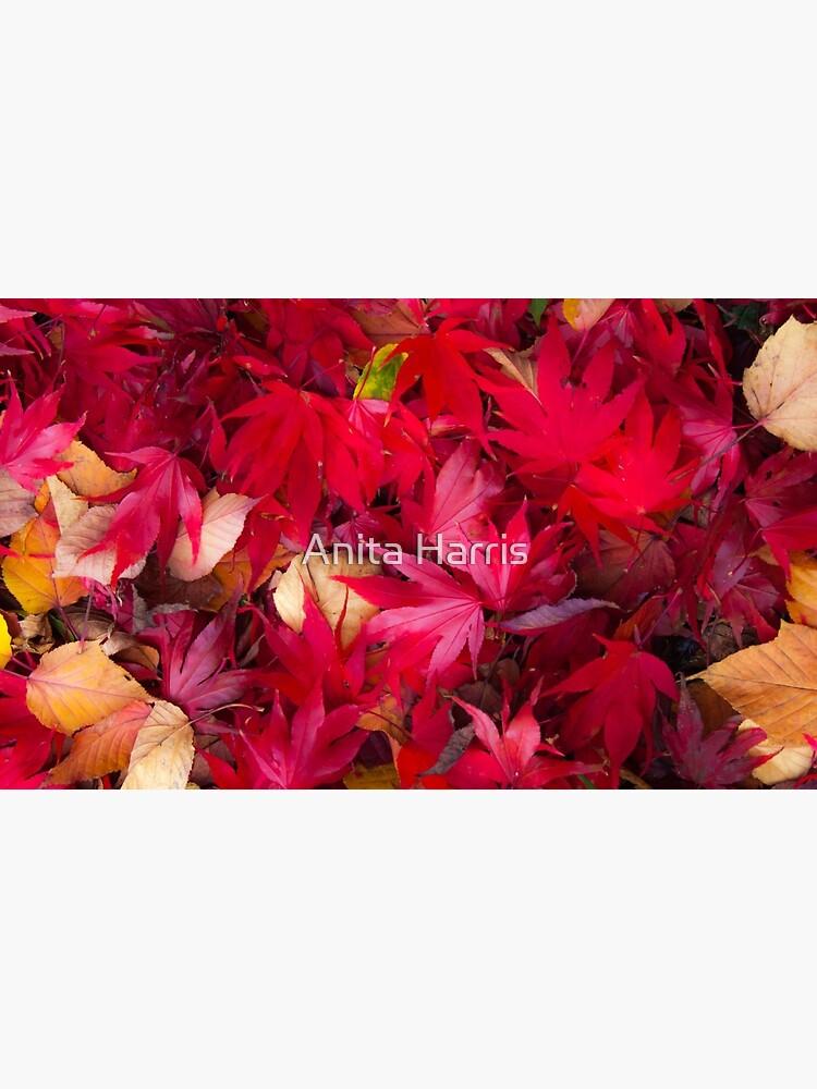 Red by plasticflower