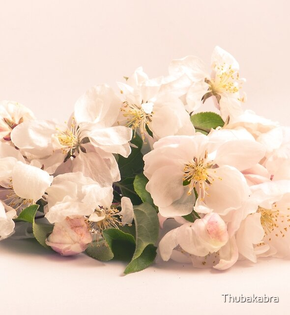 White flowers, spring photography by Thubakabra