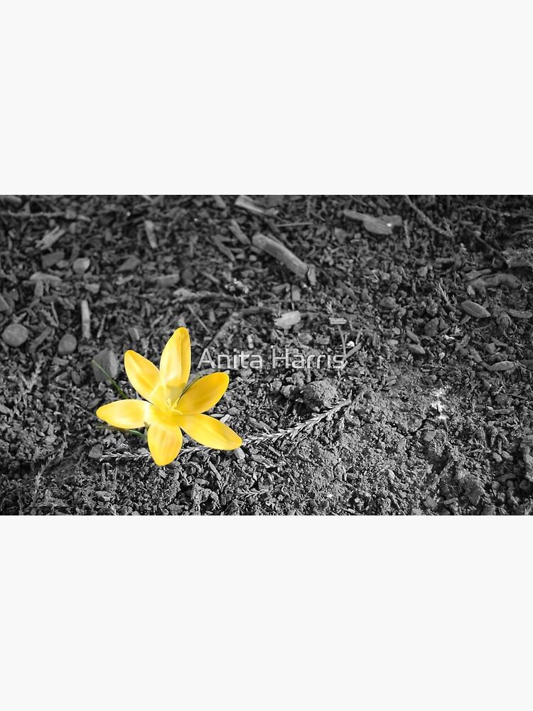 Crocus by plasticflower
