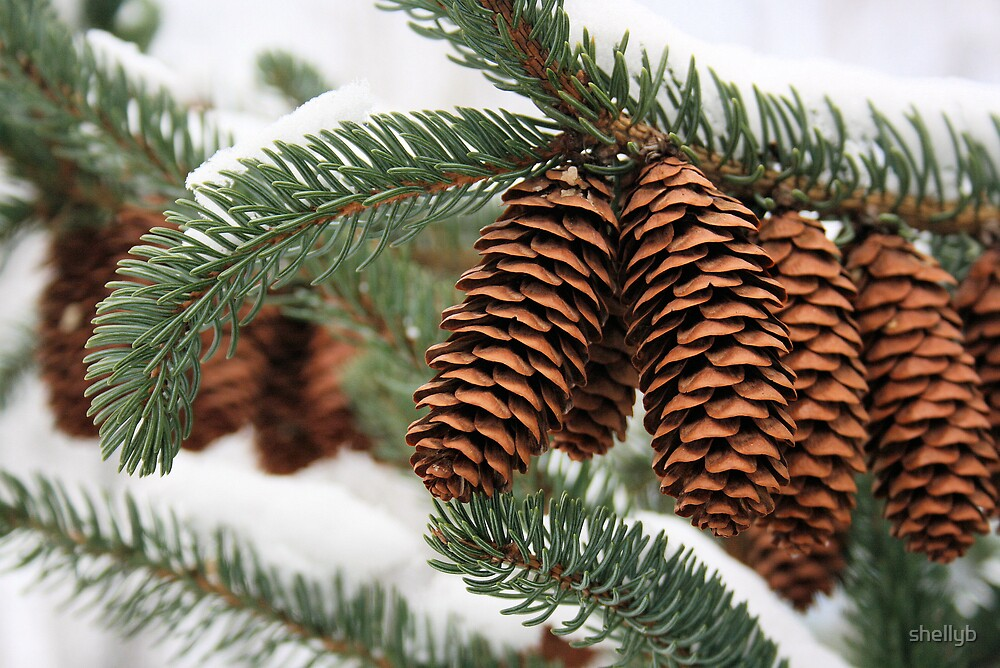 Pine Cone Time by shellyb