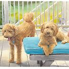 poodles on deck watercolor by Mike Theuer