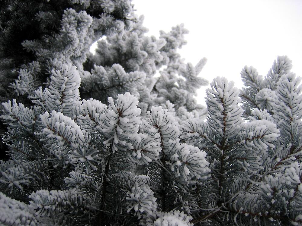 Winter by TarasKokovsky