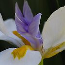 Lily by Gary  Conyard