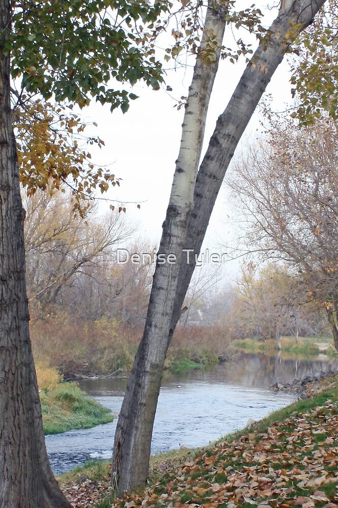 Walk along the River by Denise Tyler