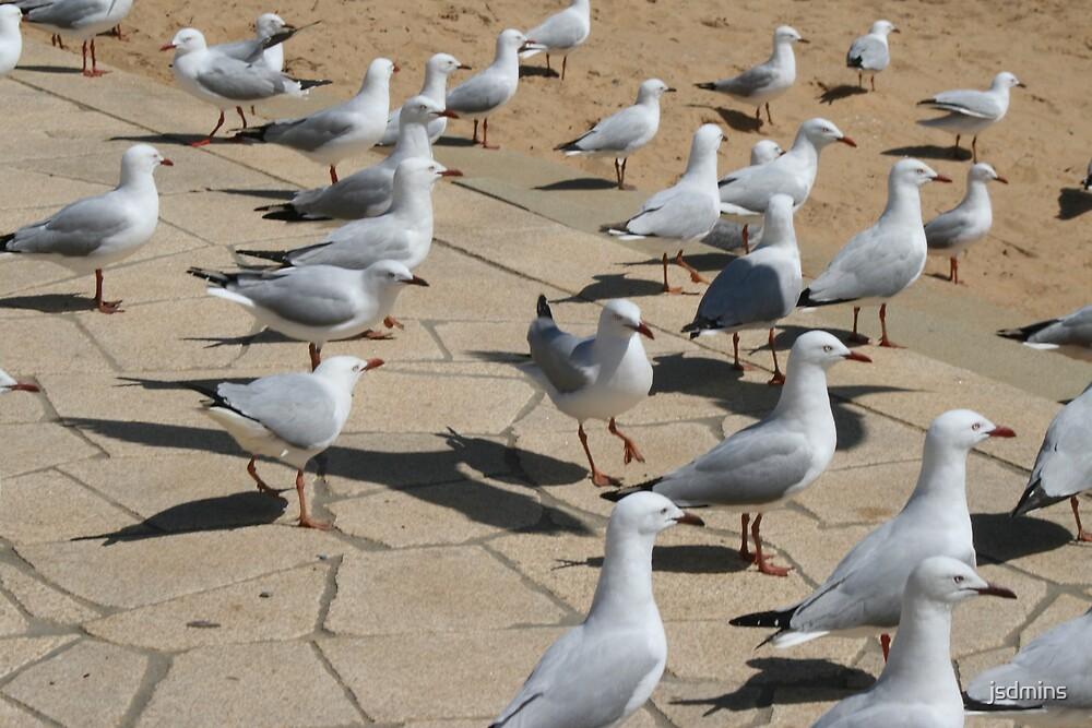 Birds by jsdmins