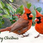 Merry Christmas Cardinals by Bonnie T.  Barry