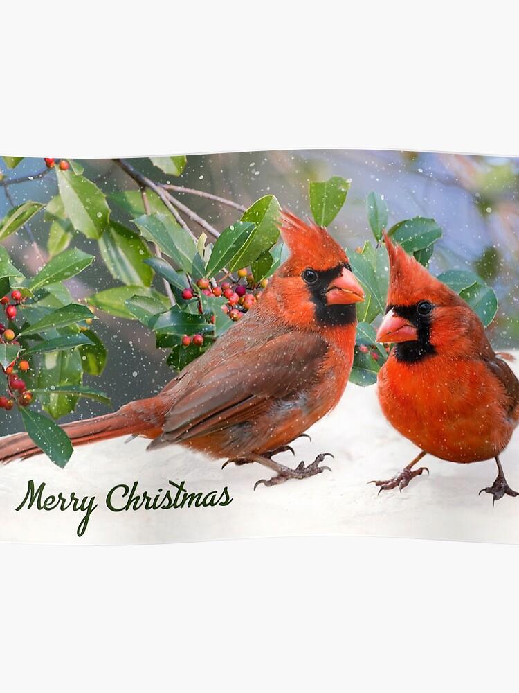 Christmas Cardinals Images.Merry Christmas Cardinals Poster
