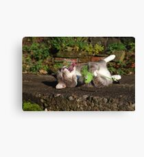 Tabby cat playing with toy mouse Canvas Print