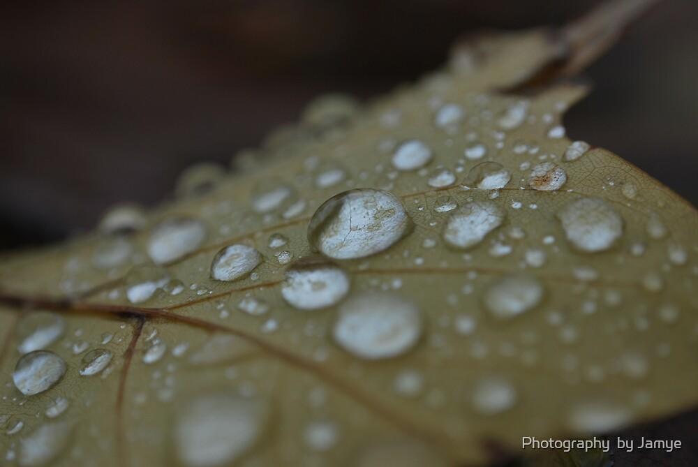 Fall n Rain by Photography  by Jamye