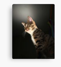 Tabby kitten with dark background Canvas Print