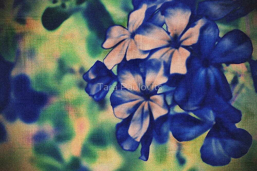 purple flowers by Tara Paulovits
