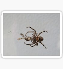 What Spiders do Sticker