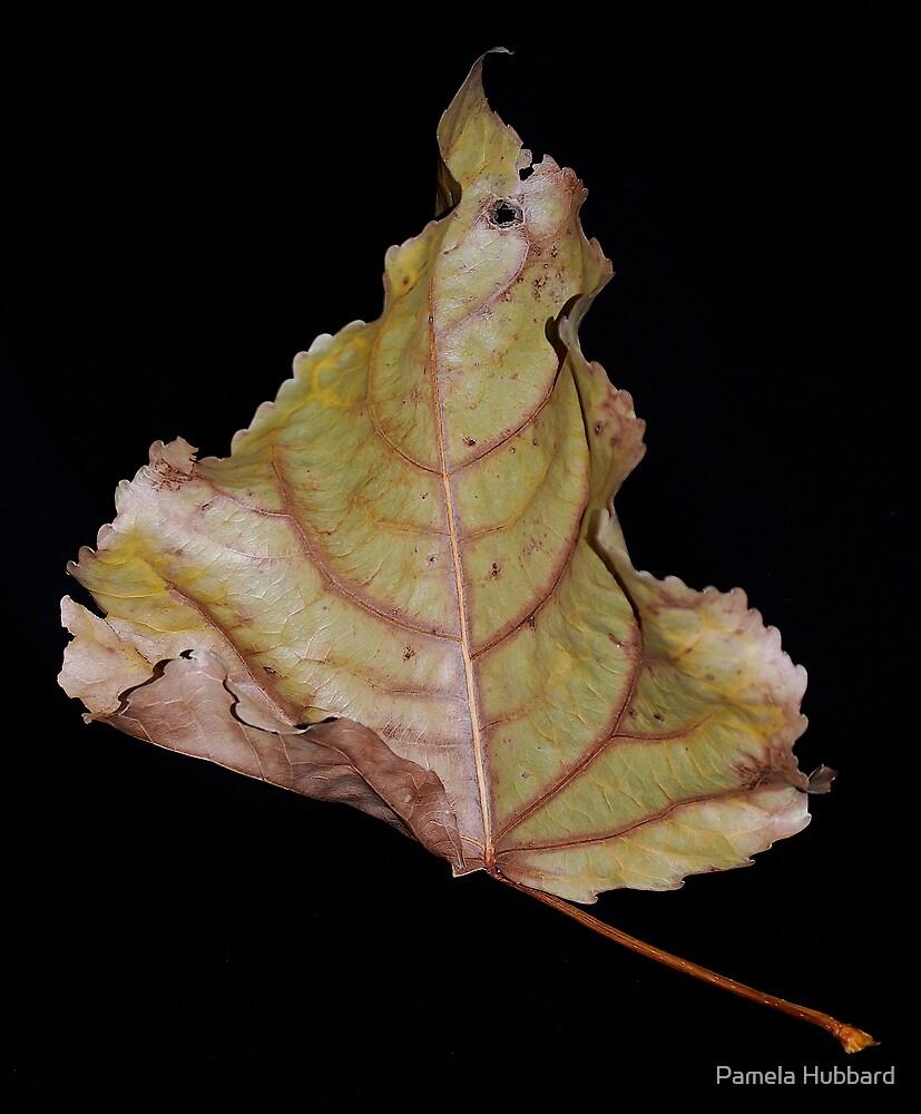 Jewels of Nature by Pamela Hubbard